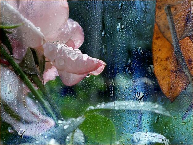 rosa con vidrio